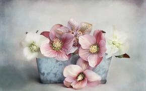 Обои цветы, горшок, digital art, морозник