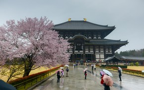 Картинка Сакура, Япония, Japan, Архитектура, Sakura, Nara, Нара, Architecture