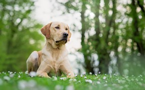 Картинка друг, собака, весна