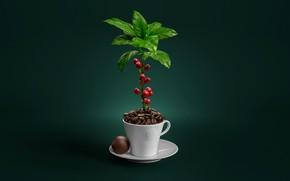 Картинка растение, кофе, кружка, блюдце, зёрна