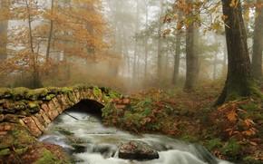 Картинка осень, мост, река