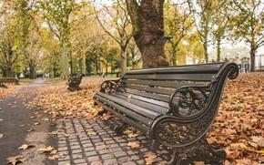 Картинка осень, листья, деревья, скамейка, парк, nature, park, autumn, leaves, tree, bench