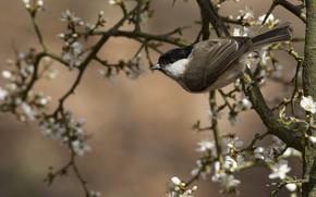 Картинка цветы, ветки, весна, птичка
