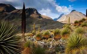 Картинка горы, природа, растение, Перу