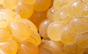 Картинка макро, ягоды, малина, жёлтая, крупным планом