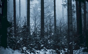 Картинка зима, лес, снег, деревья, природа, туман
