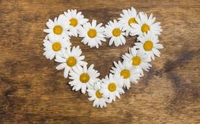 Картинка любовь, цветы, сердце, ромашки, love, heart, wood, flowers, romantic, camomile, floral