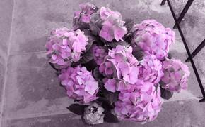Картинка цветы, серый, фон, розовая, забор, обработка, букет, розовые, бетон, монохром, ракурс, вид сверху, гортензия