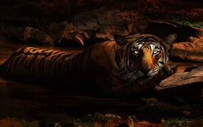 Картинка кошка, глаза, взгляд, морда, свет, ночь, тигр, поза, темный фон, камни, темно, лапа, освещение, купание, ...