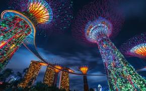 Картинка деревья, город, парк, здания, дома, вечер, освещение, Сингапур, Gardens by the Bay, Supertree Grove