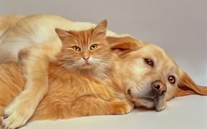 Картинка кот, собака, друзья, компьютерный дизайн