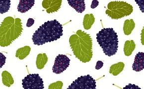 Картинка ягоды, текстура, белый фон, ежевика