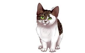 Картинка кошка, кот, белый фон, котёнок, киса
