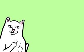 Картинка minimalism, cat, animal, ripndip