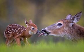 Картинка малыш, детёныш, олени, боке, оленёнок