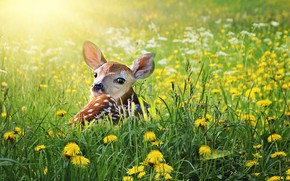 Картинка природа, животное, олень, молодой, детка, живая природа