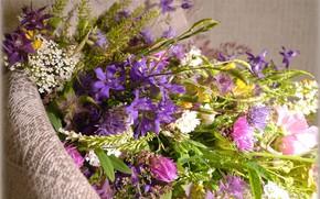 Картинка цветы, букет, полевые цветы
