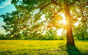 Картинка зелень, лес, лето, трава, солнце, ветки, дерево, поляна, листва