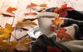 Картинка осень, листья, фон, colorful, клен, wood, autumn, leaves, cup, coffee, чашка кофе, maple