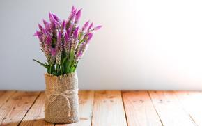 Картинка цветы, букет, лаванда