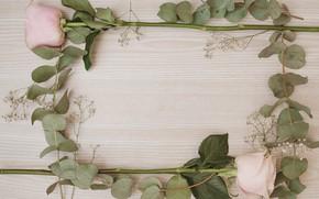 Картинка цветы, розы, рамка, pink, flowers, roses, frame