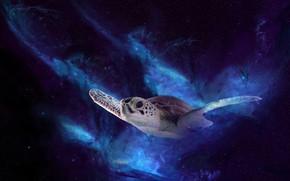 Картинка космос, полет, ночь, рендеринг, черепаха, морская черепаха