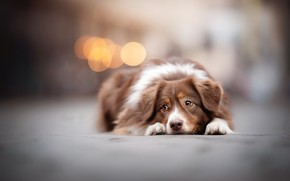 Картинка друг, улица, собака