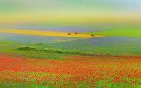 Картинка поле, цветы, маки, сено, Италия, кипы