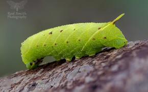 Картинка гусеница, фон, зелёная