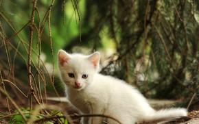Картинка белый, природа, котенок, малыш, мордочка, прогулка, сидит
