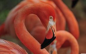 Картинка bird, flamingo, flamingo nest sleep
