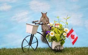 Картинка цветы, велосипед, рендеринг, флаг, белка, корзинка, фотоарт