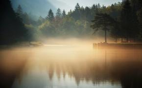 Картинка лес, туман, озеро, утро