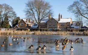 Картинка зима, солнце, снег, деревья, птицы, пруд, Англия, утки, дома, Chiltern hills