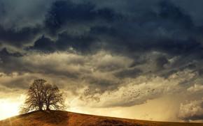 Картинка дерево, тучи, осень