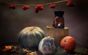 Картинка осень, животные, тыквы, морская свинка, подсвечник, композиция