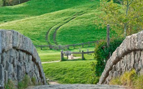 Картинка wall, grass, Nature, road, landscape, tree, hill, stones, plants, meadow, path, dirt road