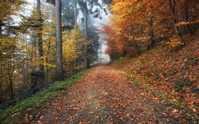 Картинка дорога, осень, листья, деревья, природа, туман, Германия, Kirchzarten