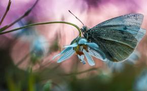 Картинка цветок, вода, капли, макро, природа, бабочка