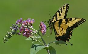 Картинка природа, фон, бабочка, крылья