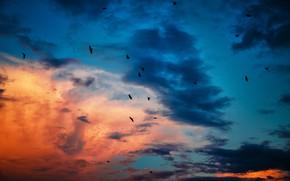 Картинка небо, закат, птицы, sky, sunset, birds, красивые обои, синее небо, blue sky, красивые облака, beautiful …