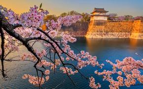 Картинка весна, Япония, сакура, храм