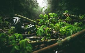Картинка Green, Fog, Forest, Mask, Leaves, Twigs