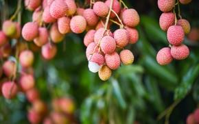 Картинка экзотические, ветка, плоды, личи китайское, листья, боке, личи, фрукты, висят, розовые, размытый фон