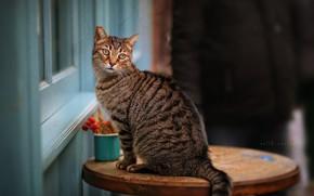 Картинка кошка, глаза, стол