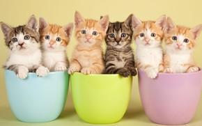 Картинка взгляд, кошки, чашки, котята, рыжие, компания, серые, друзья, много, полосатые, мордашки, миски, пиалы