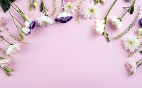 Картинка цветы, white, белые, розовый фон, хризантемы, flowers, beautiful, romantic, эустома, eustoma