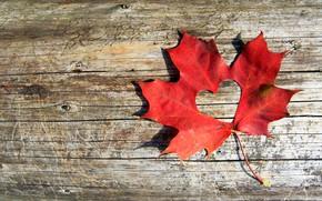 Картинка осень, листья, любовь, сердце, red, love, клен, heart, wood, autumn, leaves, maple