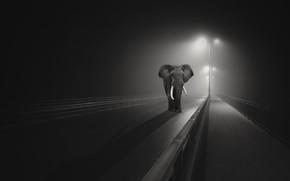 Обои слон, город, ночь, мост