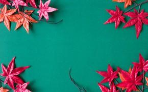 Картинка осень, листья, фон, red, клен, background, autumn, leaves, maple